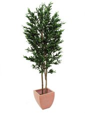 Europalms Olivenbaum mit Oliven 200 cm (82506410)