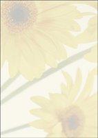 sigel DP465 Motiv-Papier, A4, 90g/qm, 25 Blatt, Motiv: Finesse