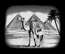 Mammut Scraper Super silber - Pyramiden (A30SSF10)