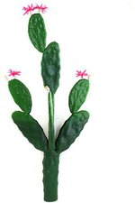 Blätterkaktus mit Blüte 77cm