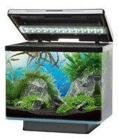Juwel Aquarium Vio 40 - schwarz
