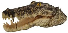 Zooplus Krokodil-Kopf (15 x 6 x 5 cm)