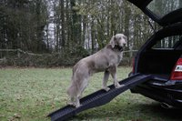 Nobby Hunderampe (152 cm)