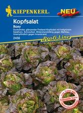 Kopfsalat Roxy (Samen)