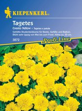 Tagetes Cresto Yellow (Samen)
