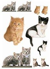 Komar Katzen
