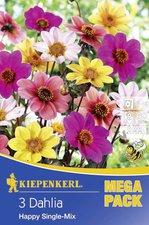 Kiepenkerl Beet-Dahlien Happy Single-Mischung