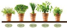Eurographics DS-AU1018 Herb Pots