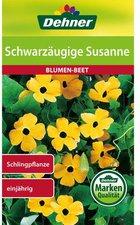 Schwarzäugige Susanne Samen