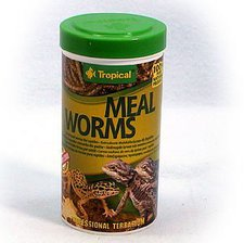 Tropical Meal Worms (100 ml)
