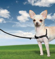 Petsafe Easy Walk Harness (Gr. L)