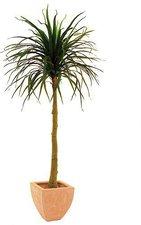 Yucabaum mit Topf 150cm