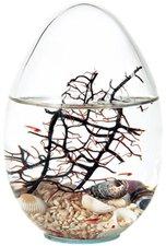 Globus International Beachworld Oval mit Gorgonie (23 cm)