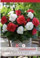 50 Stücke Hausgarten Zierpflanzen Schöne Begonie Blumen Samen W2YN