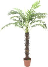 Europalms Cocospalme mit 18 Wedeln 160 cm