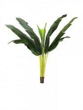 Europalms Bananenpflanze 150 cm