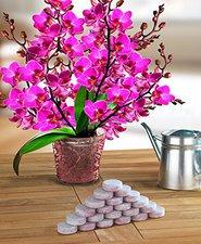 Wenko Dünge-Tabs für Orchideen, 20 Stk.
