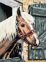 MAMMUT Malen nach Zahlen Pferd im Stall